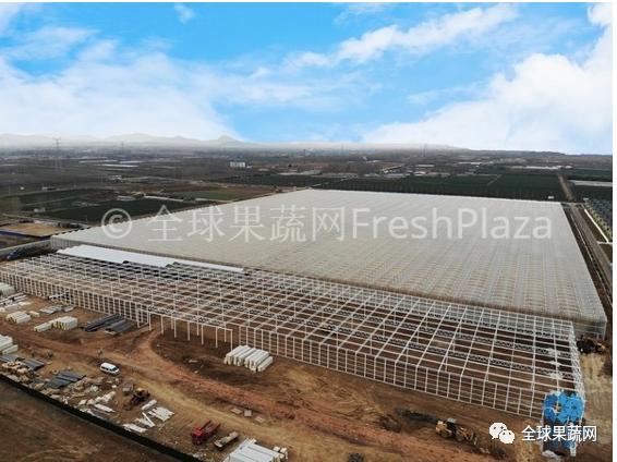 【资讯】山东日照一家全新农业公司正在建设其324公顷的温室园区