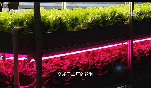 【资讯】CCTV1《开讲啦》  杨其长:植物工厂彰显国家农业高技术水平